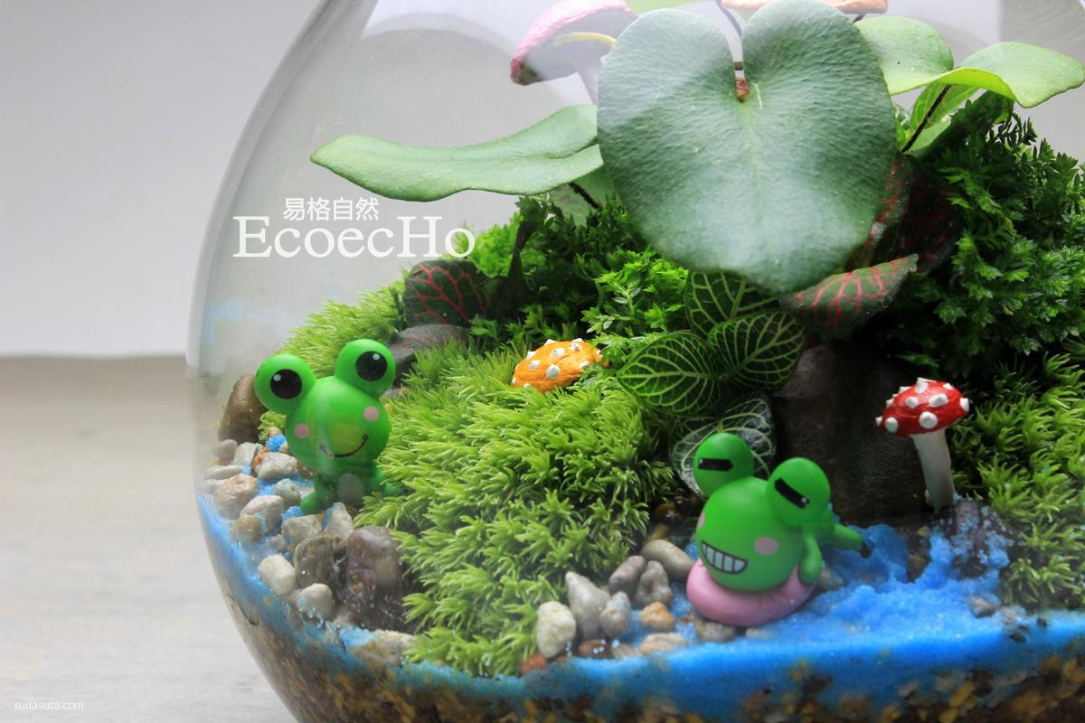 ecoecho 我梦想中的吉普力