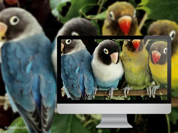 十一月鸟类主题壁纸分享