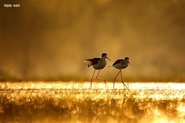 Tejas Soni 自然摄影欣赏