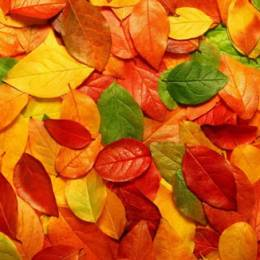 迷人秋季 秋天桌面壁纸下载