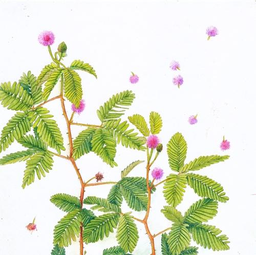 周小兜 人间四季 花树一生