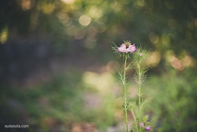 Staci Lee Kennelly 唯美生活摄影欣赏
