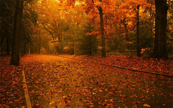 秋天桌面壁纸免费下载