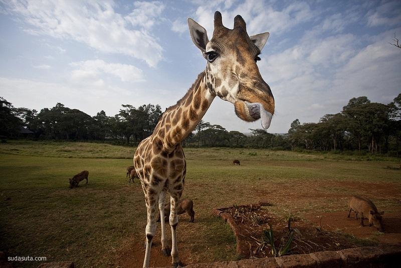 长颈鹿庄园