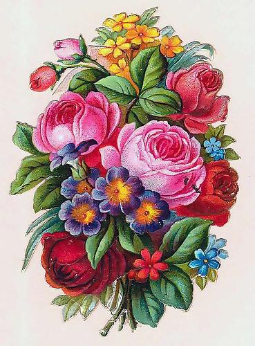 图片素材 复古蔷薇花朵