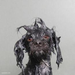 Sophie Gamand 主题摄影《湿狗狗》