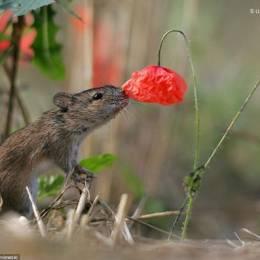 自然野生动物摄影作品集锦