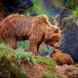 图片素材 自然熊乐园