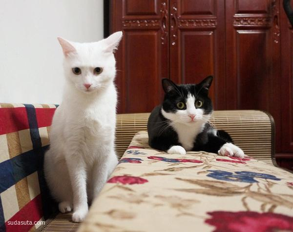 黑猫警长和白猫警探 喵星人日记