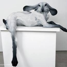Beth Cavener Stichter 雕塑设计欣赏
