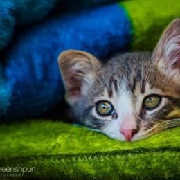 Alex Greenshpun 宠物摄影欣赏