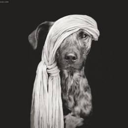 Elke Vogelsang 狗狗肖像摄影欣赏