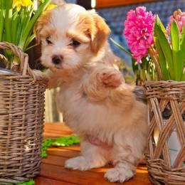 超级可爱小萌狗狗
