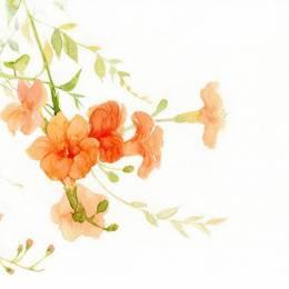 dodolog 清新手绘花朵