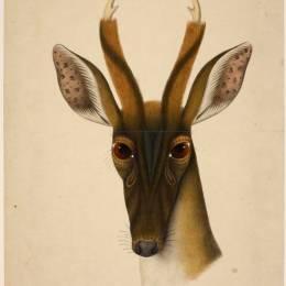 大英图书馆珍稀野生动物插图