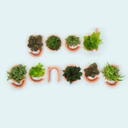 Autobahn 清新的植物的字体排版