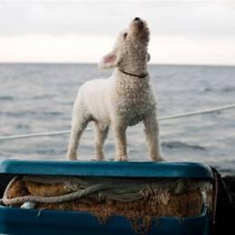 Corey Arnold 摄影欣赏《冒险在海上》