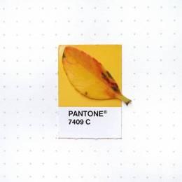 Inka Mathew 花园中的PANTONE色