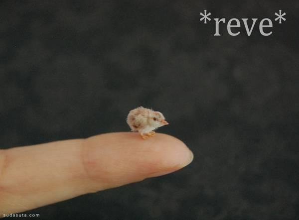 reve (4)