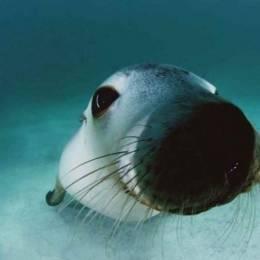 David Doubilet 神奇的水下摄影欣赏