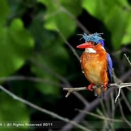 Edgar Thissen 野生动物摄影欣赏
