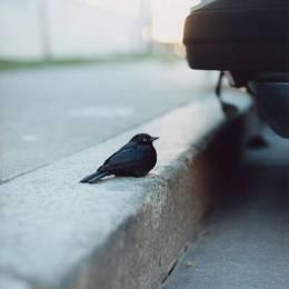 Gregory Halpern 生活摄影欣赏
