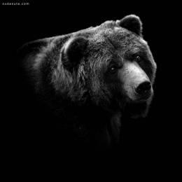 Lukas Holas 黑白动物肖像摄影欣赏