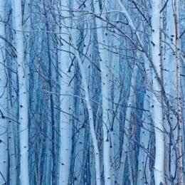 Guy Tal 迷人色彩的自然摄影欣赏