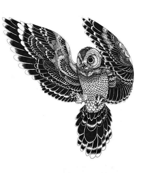Iain Macarthur 动物黑白肖像插画欣赏