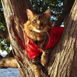 Joann Biondi 一只猫的肖像摄影