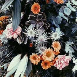 Alishia Farnan 自然摄影欣赏