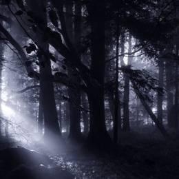 Kilian Schönberger 黑暗森林 自然摄影欣赏