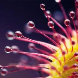 惊人浪漫的的微距自然摄影作品