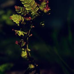 Emerald Wake 唯美浪漫的自然摄影欣赏