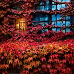 Ulf Bodin 富于色彩的秋季自然摄影欣赏