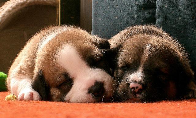 酣睡的狗狗 主题摄影欣赏