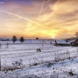 白雪与骏马 主题摄影欣赏