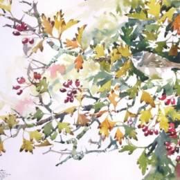 Darren Woodhead 自然水彩手绘作品欣赏