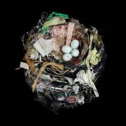Sharon Beals 鸟巢的摄影欣赏