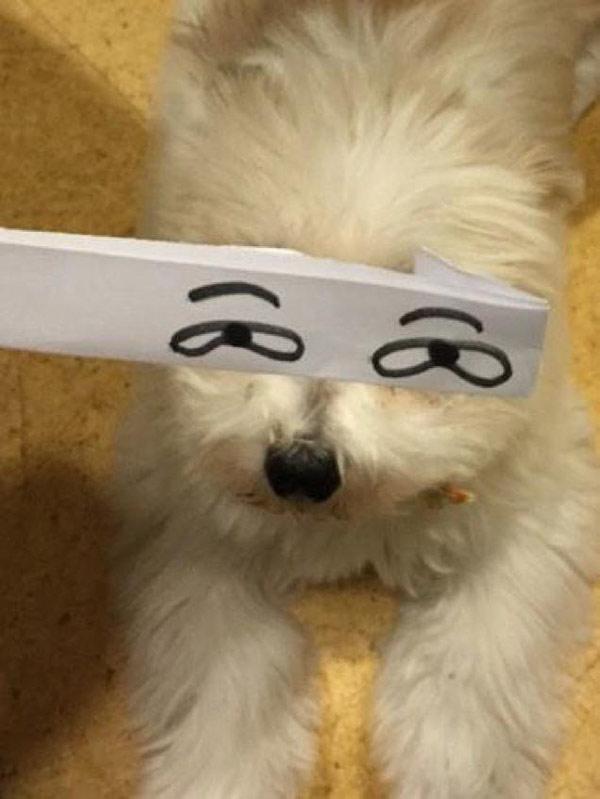 创意生活 为你的宠物添加卡通风格的眼睛