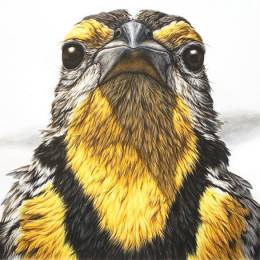 George Boojury 自然的姿态 动物肖像插画欣赏