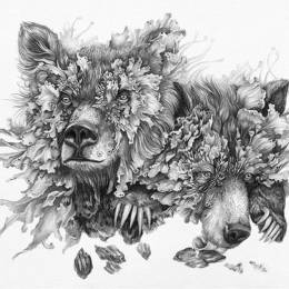Christina Mrozik 和 Zoe Keller 自然的手绘插画欣赏