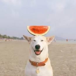 Sorasart Wisetsin 世界上最幸福的狗摄影作品欣赏