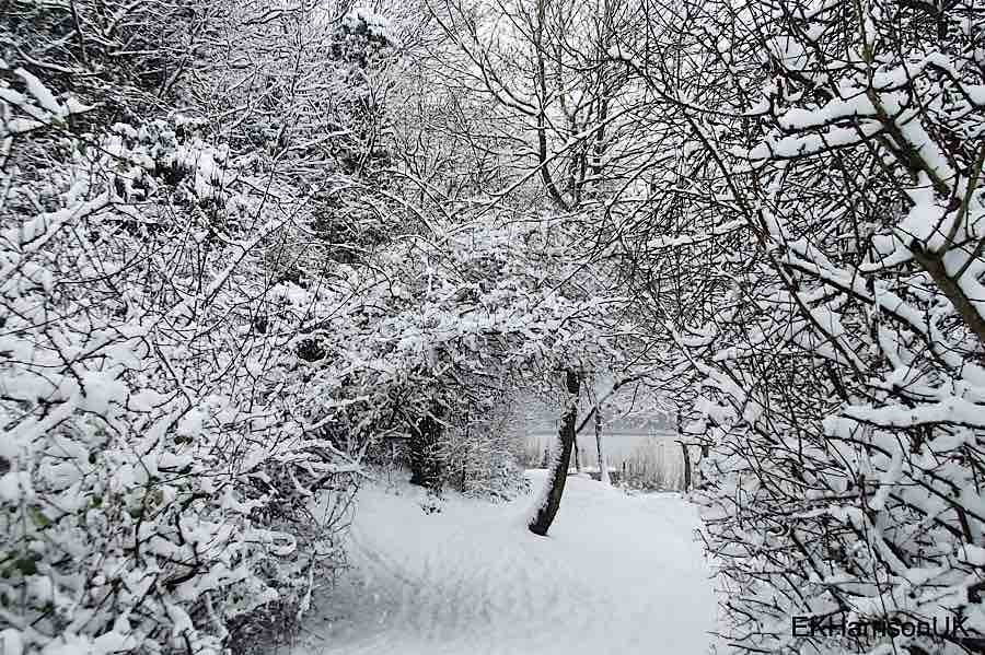 白雪如银 主题摄影欣赏