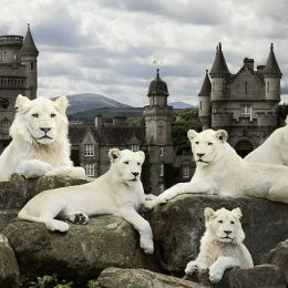 Andrew Fladeboe 动物摄影欣赏