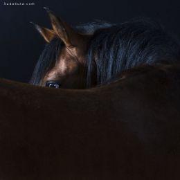 Rob Bahou 动物肖像摄影欣赏