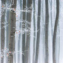 Heiko Gerlicher 冬季自然摄影欣赏