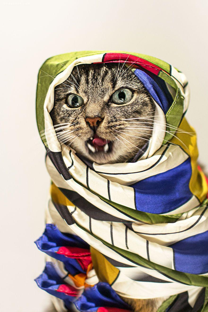 Jason Mc Groarty的猫咪公主 Hummus