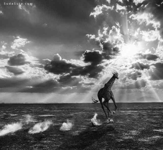 David Yarrow 唯美自然 黑白摄影欣赏