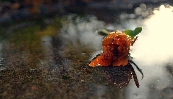 Joy Jordan 唯美的自然摄影欣赏